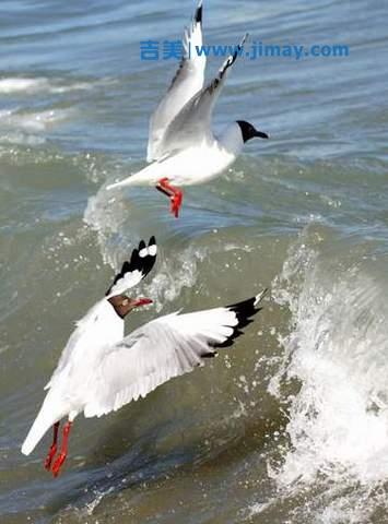 中科院安防安防视频监控系统力助青海湖生态保护